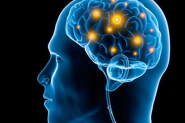 Zanimljivosti iz nauke Human-brain-functions